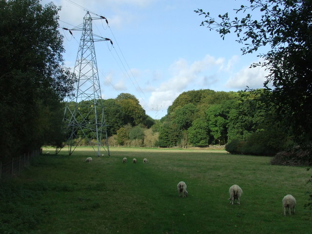 Sheep And Pylons