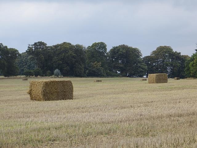 Bales, Dunbarney