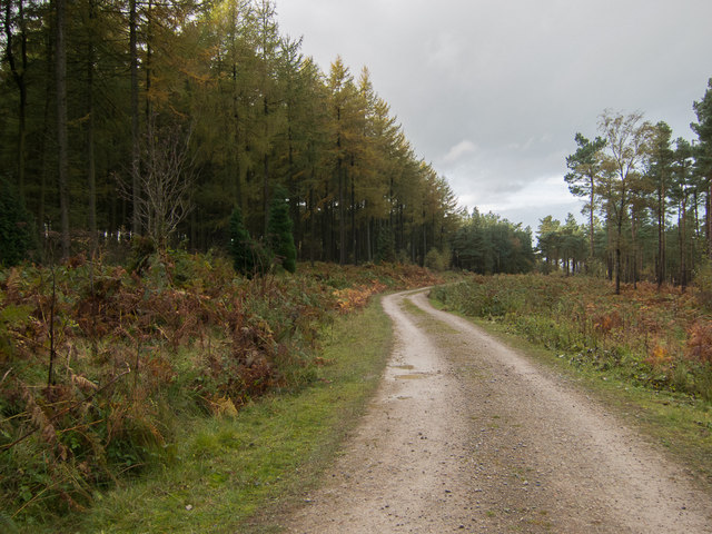 Forest road in Roppa Wood
