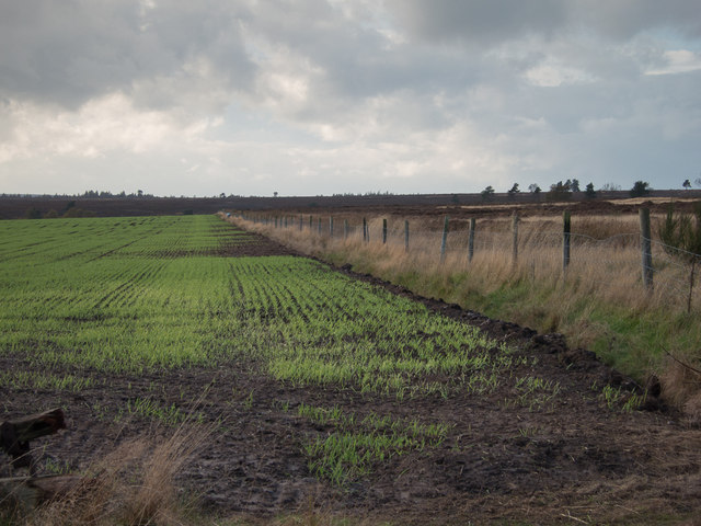 Winter Barley by Helmsley Moor
