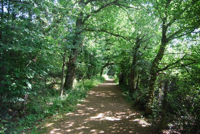 Footpath, Botley Wood
