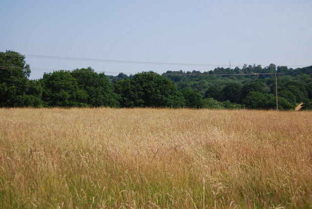 A grassy Sussex field