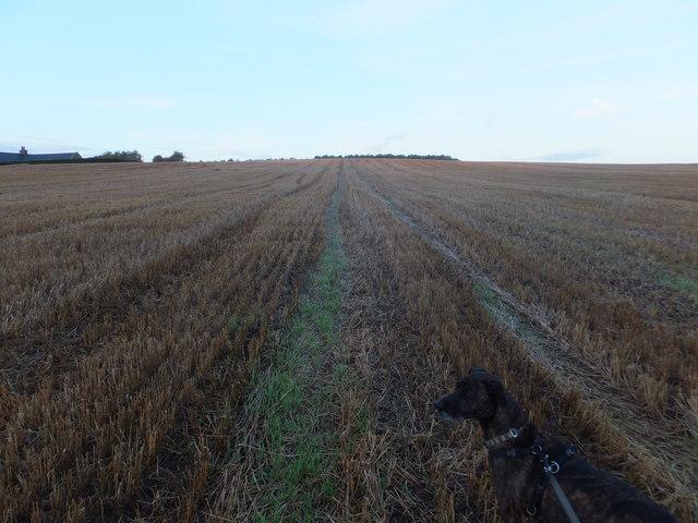Stubble field, Parkside