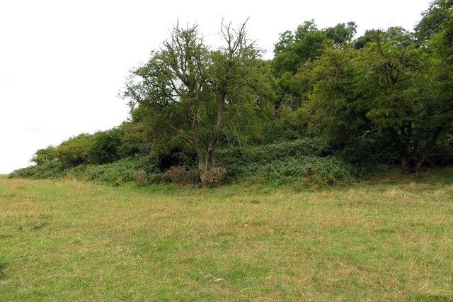 The wood on Harrowdown Hill