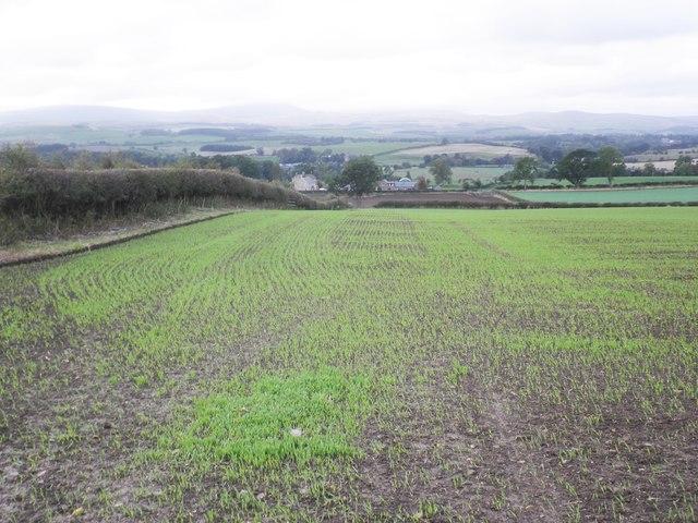Emerging winter crop, near Hepburn Bell