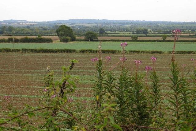 Fields from Harrowdown Hill