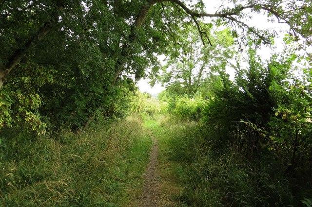 Footpath over Harrowdown Hill
