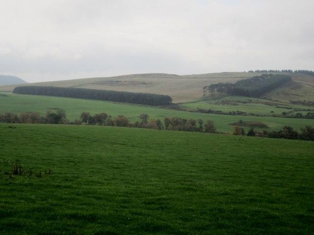 Grassland east of South Lyham