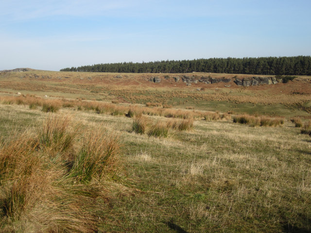 Looking across rough grassland towards Moss Ridge