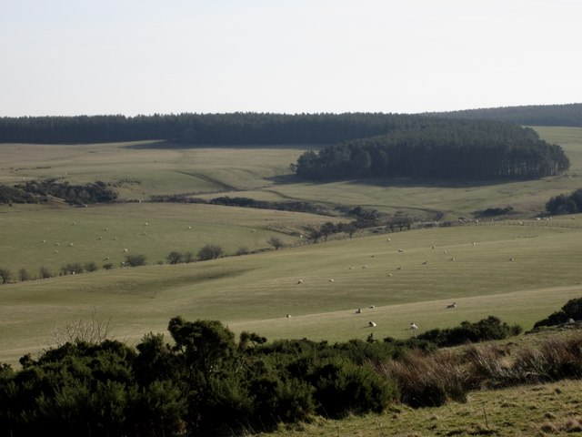 Grassland on Lyham Moor