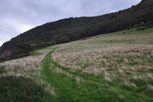 West Somerset : Grassy Path & Hillside