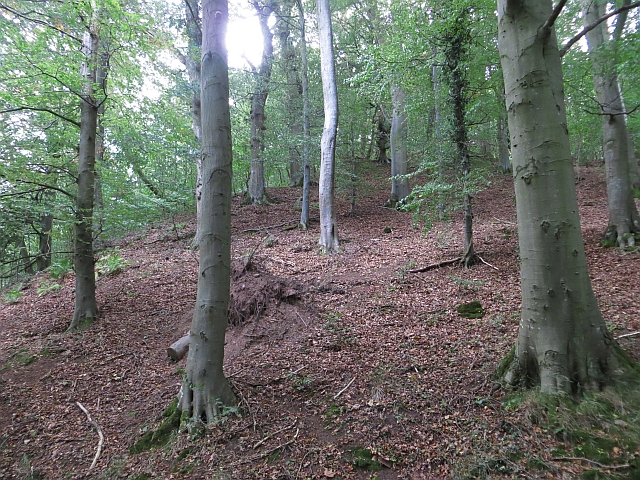 Beech wood, Glen Farg