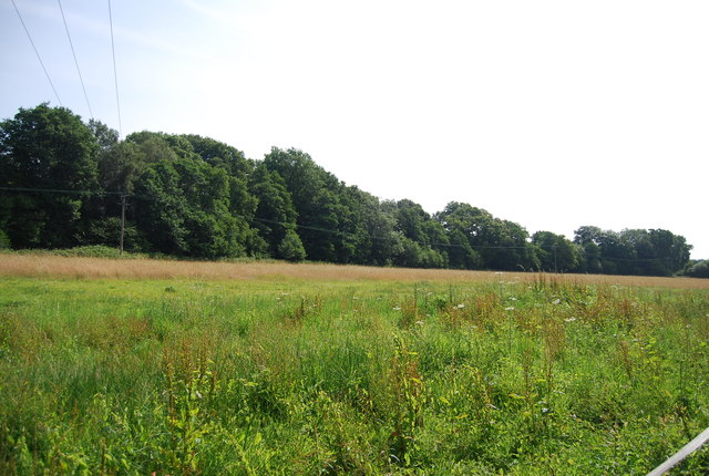 Meadow in the Medway Valley