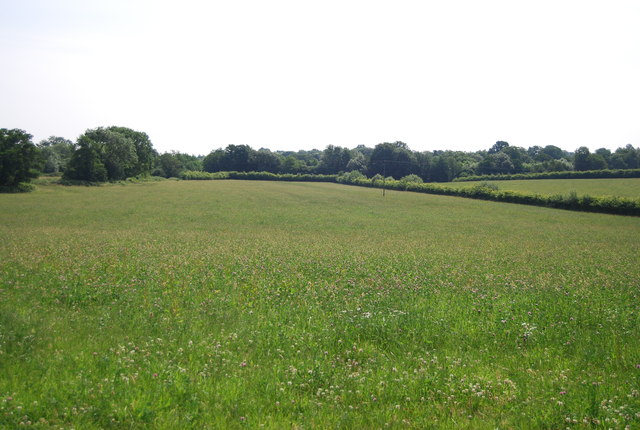 Grassland in the Medway Valley
