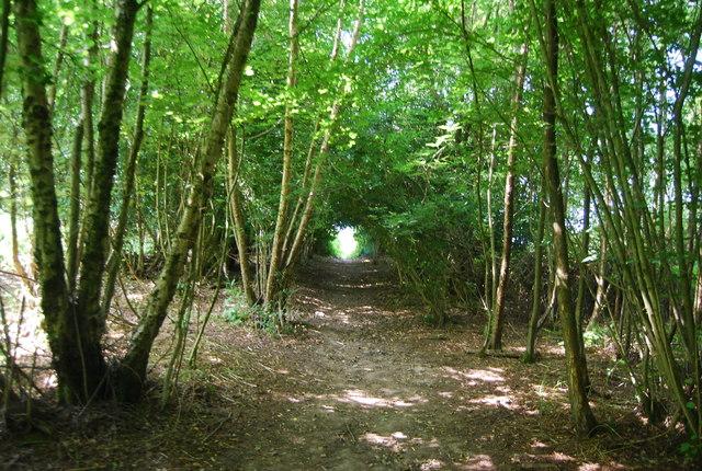Footpath through Brakey Shaw