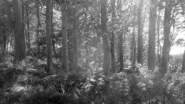 Woodland, Pisgah