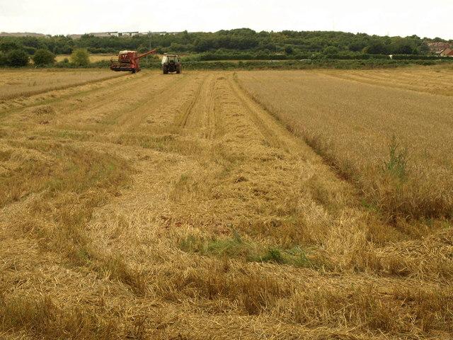 Harvesting near Frenchay