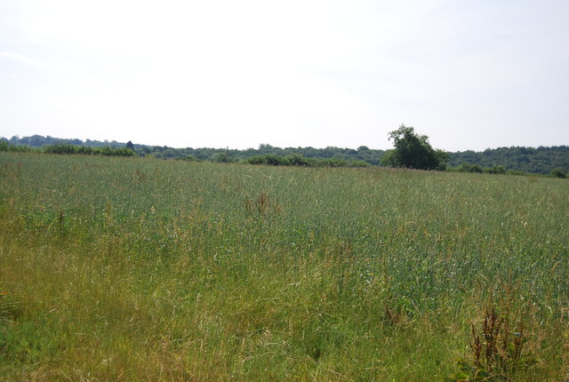 Grassland near Weir Wood Reservoir