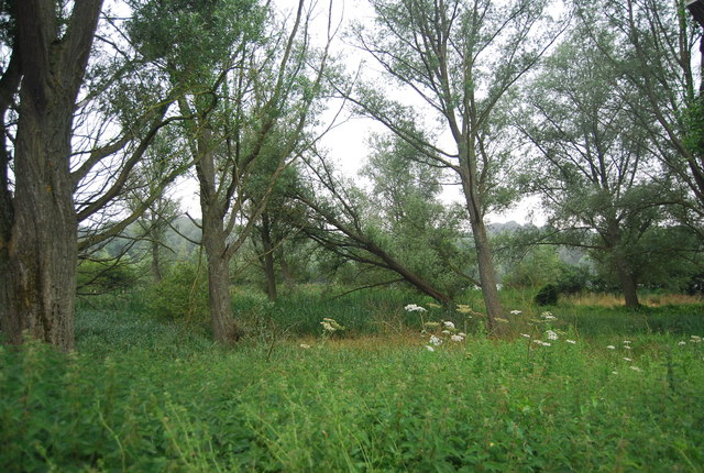 Woodland by Whitlingham Great Broad