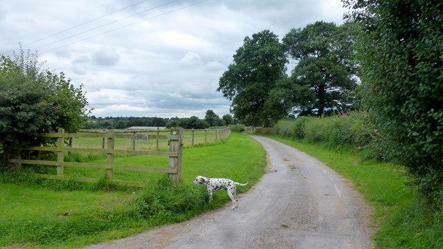 Churchfields Farm with Dalmatian