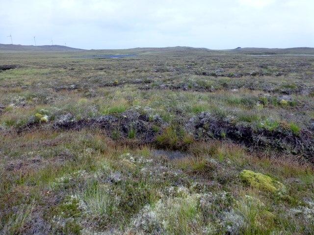 Bleak Moorland View