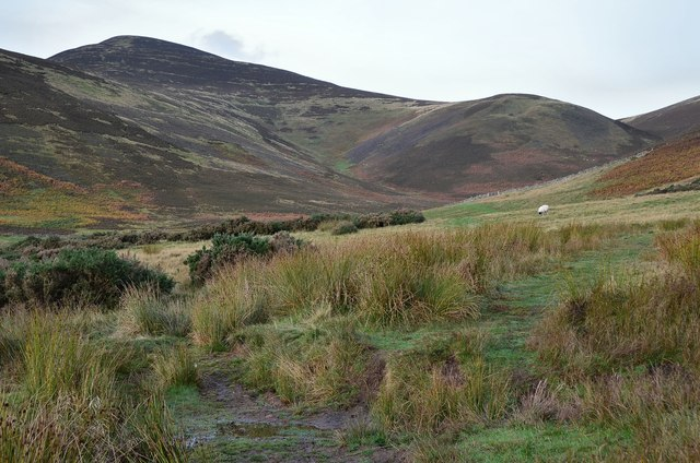 Scald Law from the Grain Burn path