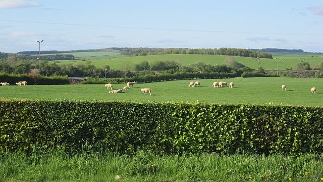 Sheep, Brickrow Holdings