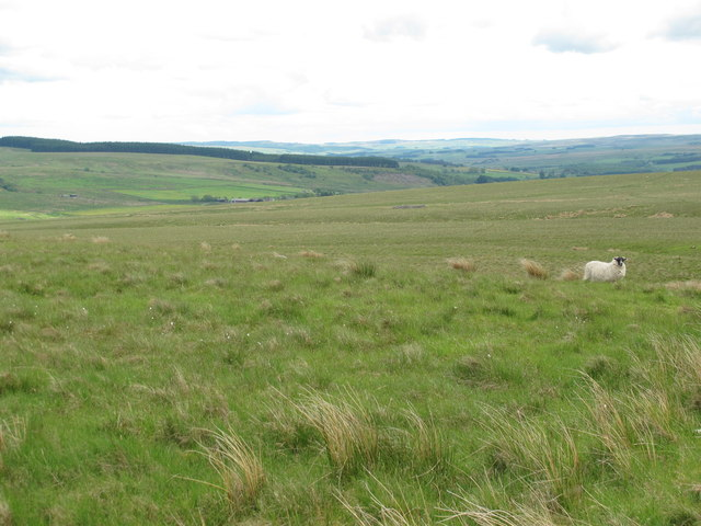 Moorland north of Branchy Sike