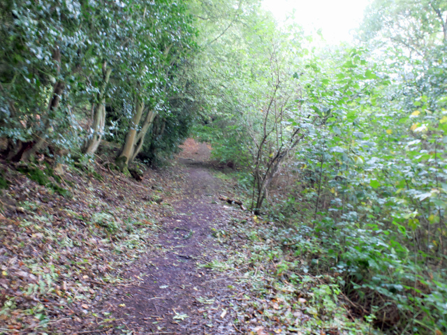 Woodland path at Whiteleaved Oak