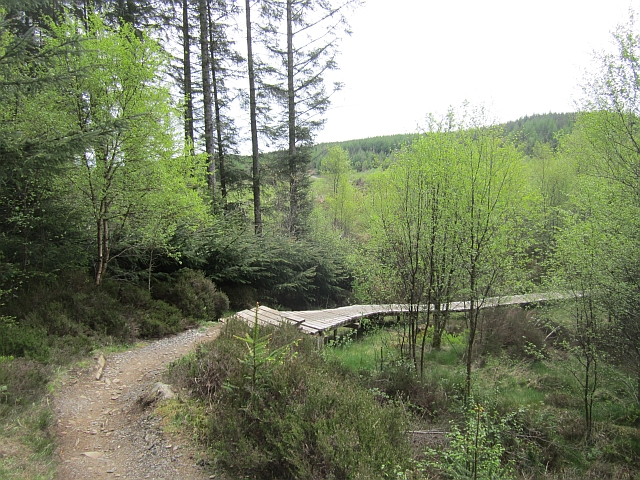 Boardwalk, Mabie Forest