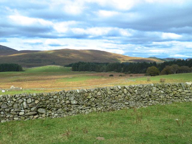 Dry stone dyke near Pibble