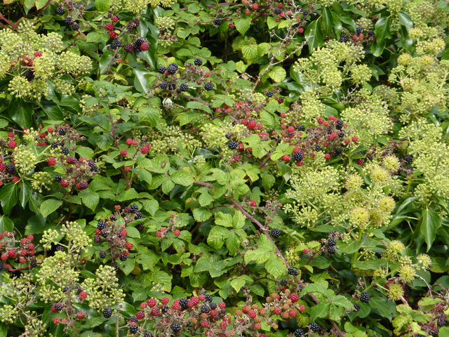 Autumn hedgerow fruit and flowers