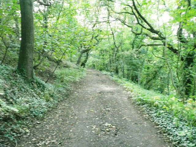 Ellistones Lane through North Wood