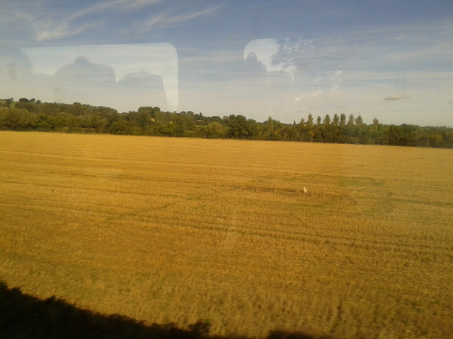 Field near Bank Farm seen from the train
