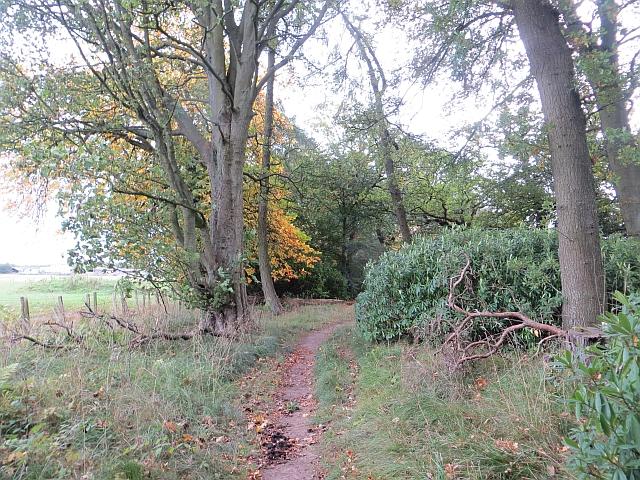 Woodland single track, Thornton
