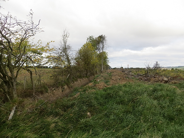 Ditch and replanted wood