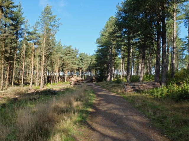 Tentsmuir track
