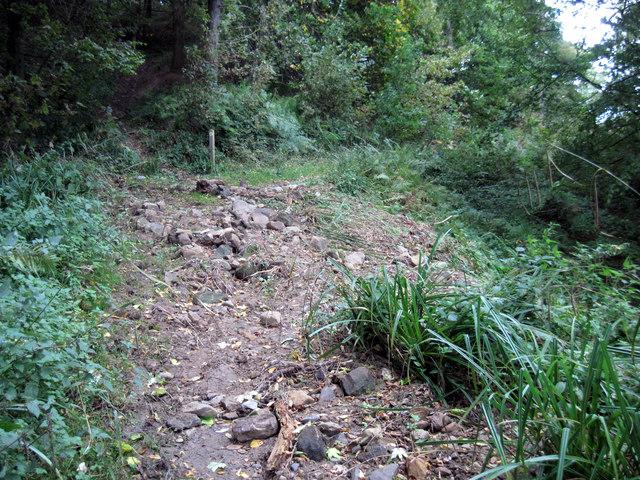 Debris  strewn  footpath  in  Castle  Wood (2)