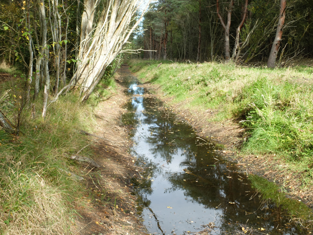 Ditch in Tentsmuir Forest