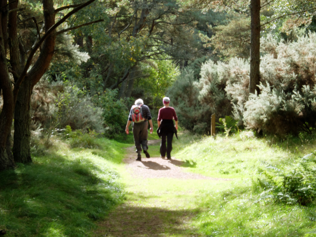 Walkers in Tentsmuir Forest