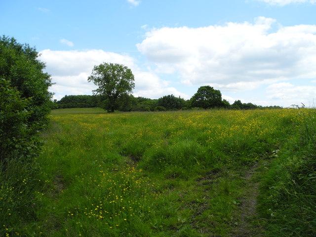 Sutton Meadows (2)