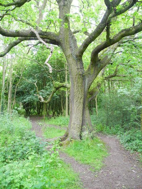 Bloomer Wood (1)