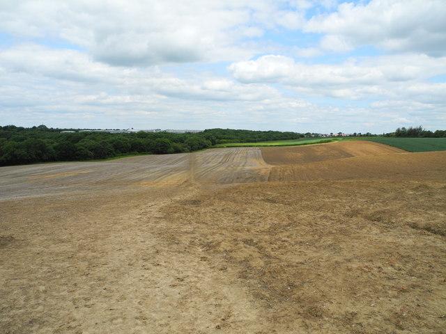 Arable land northwest of Mowlands Farm