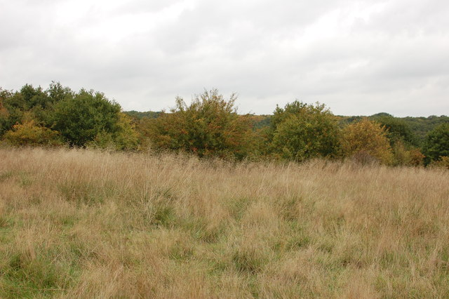 Grass and scrub, Epping Forest