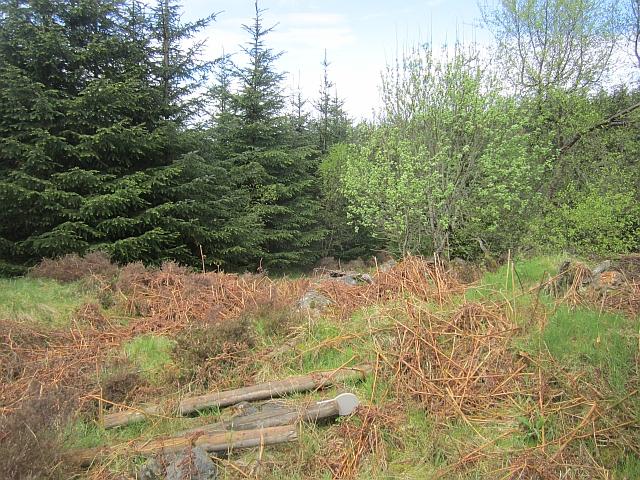 Old dyke, Woodhead Hill
