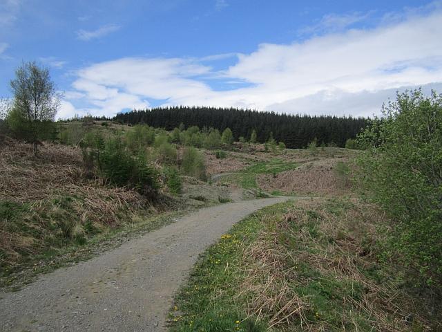 Logging road, Mabie