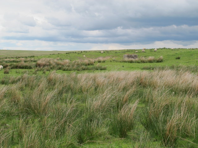 Moorland south of Bluestone Edge