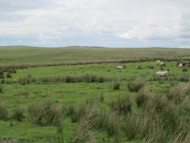 Moorland east of Tofthouse Road