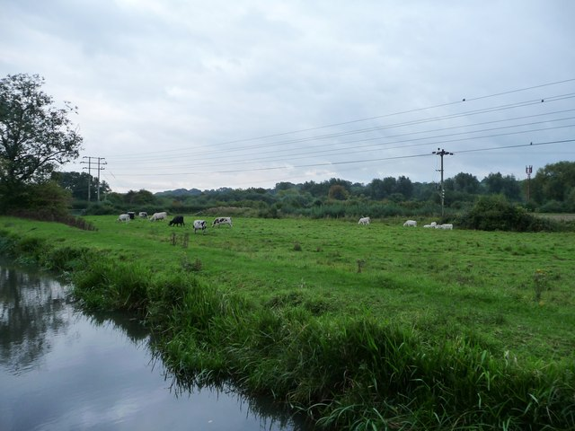 Cattle pasture in the Kennet valley