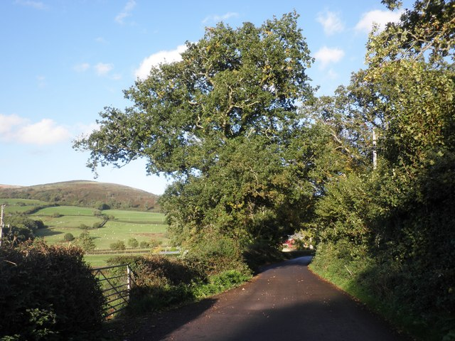 Lane to Triscombe